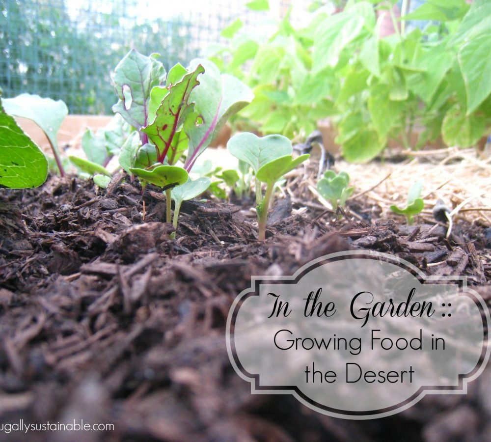 Fullsize Of Rain Gutter Grow System