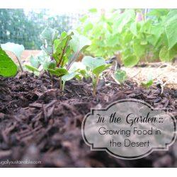 Small Crop Of Rain Gutter Grow System