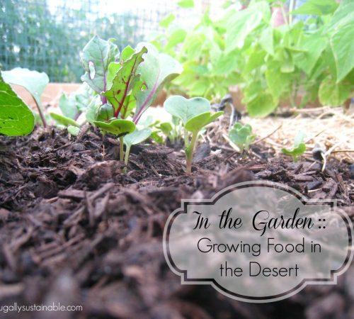 Medium Of Rain Gutter Grow System