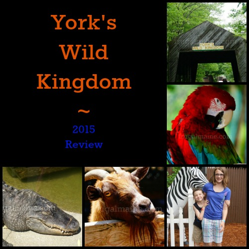 YorksWildKingdomCollage1