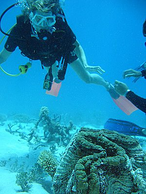 A scuba diver looking at a giant clam on the G...