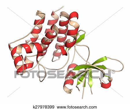 Stock Illustration of Janus kinase 1 protein Part of JAK-STAT