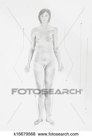 Pictures of detail of conventional anatomical position women