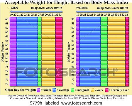 Clipart of BMI Indexes for Males and Females Labeled 9779h_labeled - 33 bmi