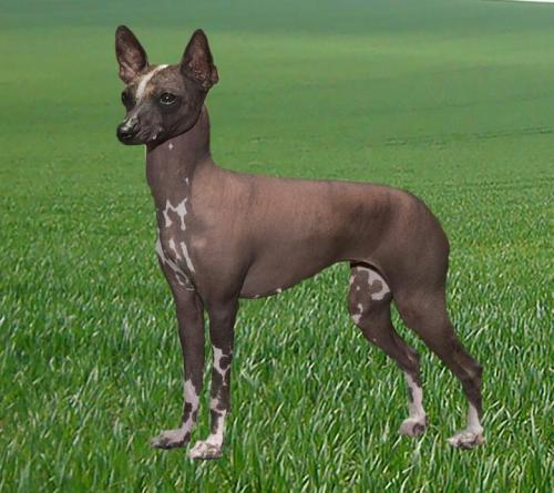 Medium Of American Dog Breeds