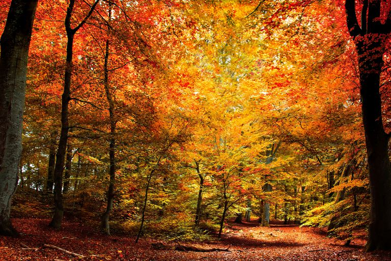 Fall Weather Wallpaper 10 Amazing Facts About Land Biomes