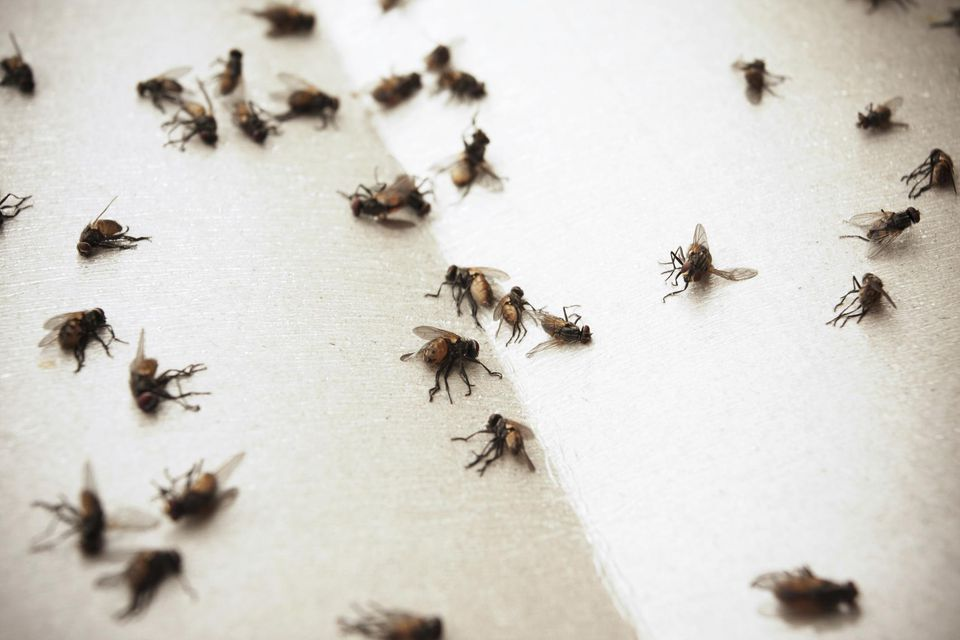 5 Steps For Indoor House Fly Control - Keep Flies Out Of House