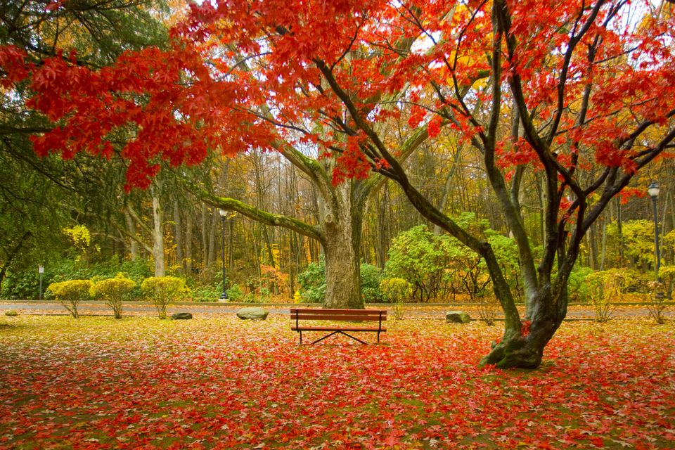 Autumn Falling Leaves Live Wallpaper New England Foliage Central 2017