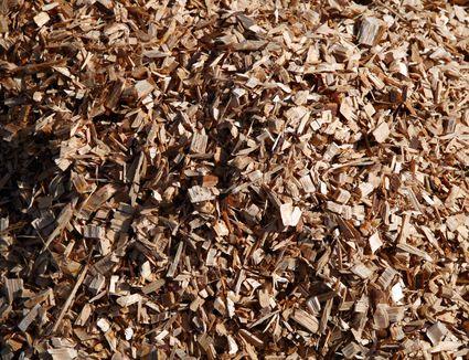 Cedar Chips and Pine Wood Shavings