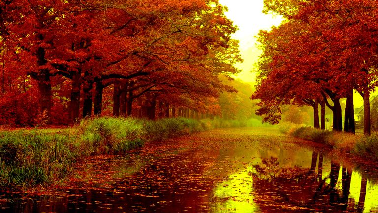 Wallpaper Images Of Fall Trees Lined Lake 39 Autumn Wallpapers For Computers Tablets Or Phones
