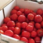 tomatoes-half-bushel