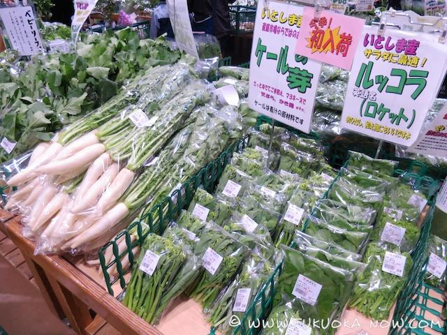 fn185 veggie ito sai sai 14