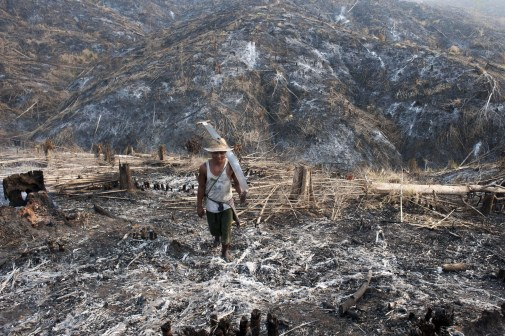 A worker carries where teak trees once grew in the Bago Region of Myanmar after the land was scorched ahead of replanting. AFP PHOTO / YE AUNG THU
