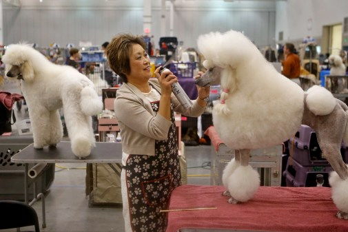 Miyuki Yeno grooms poodle Annalise during Saturday's Virginia Memorial Day Cluster All-Breed Dog Show at the Hampton Roads Convention Center. The event featured judging, vendors and a junior showmanship clinic.
