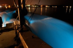 As VIMS research tech, Joe Cope, drives a boat in the York river phytoplankton known as dinoflagellates glow in the wake Tuesday night. The algae are a plant that blooms when conditions are right in the water. (Rob Ostermaier)