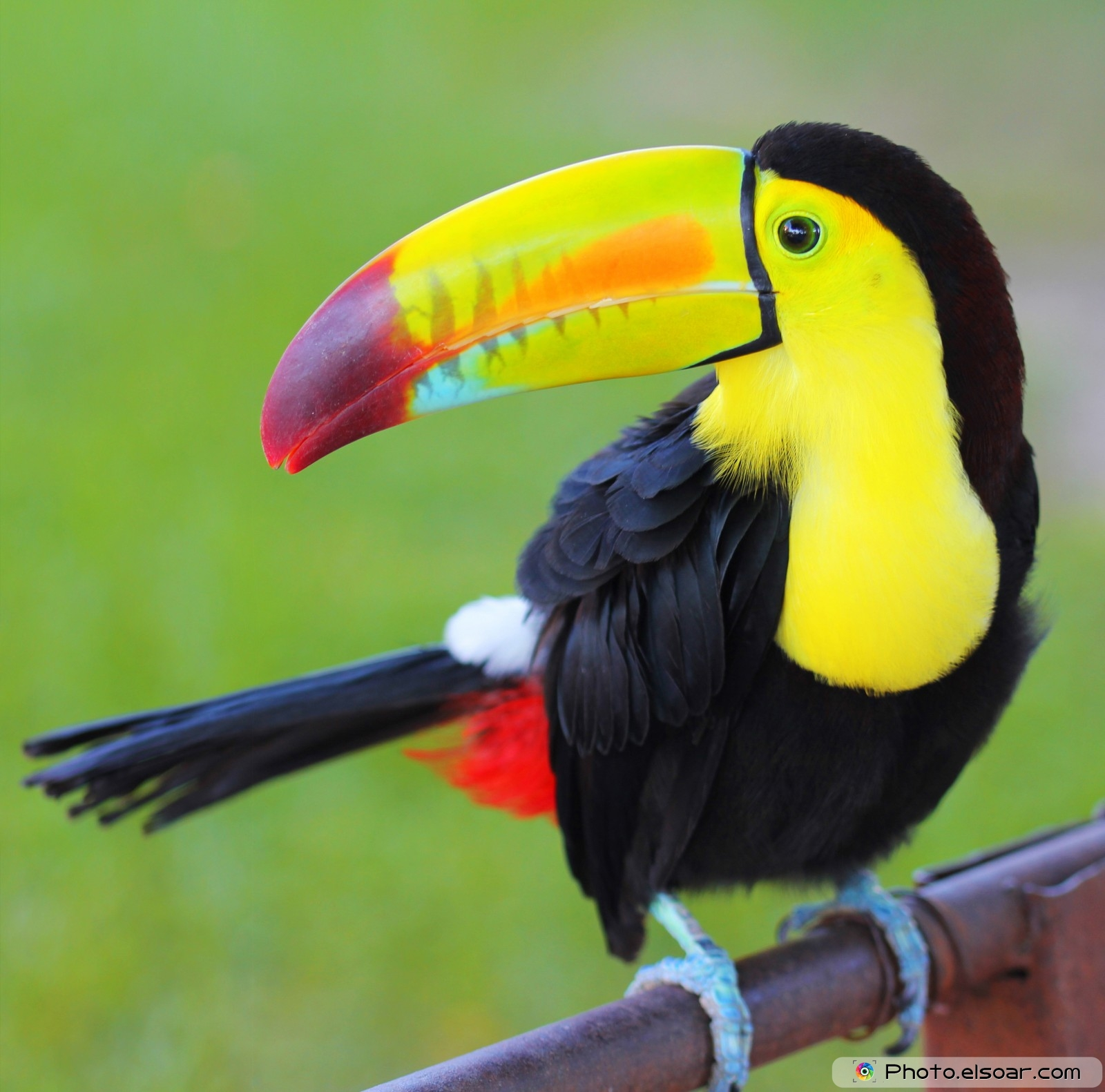 Iphone X Wallpaper Download Live Mobile Keel Billed Toucan Wallpaper Full Hd Pictures