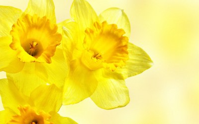 Yellow Flower HD Wallpapers   Full HD Pictures