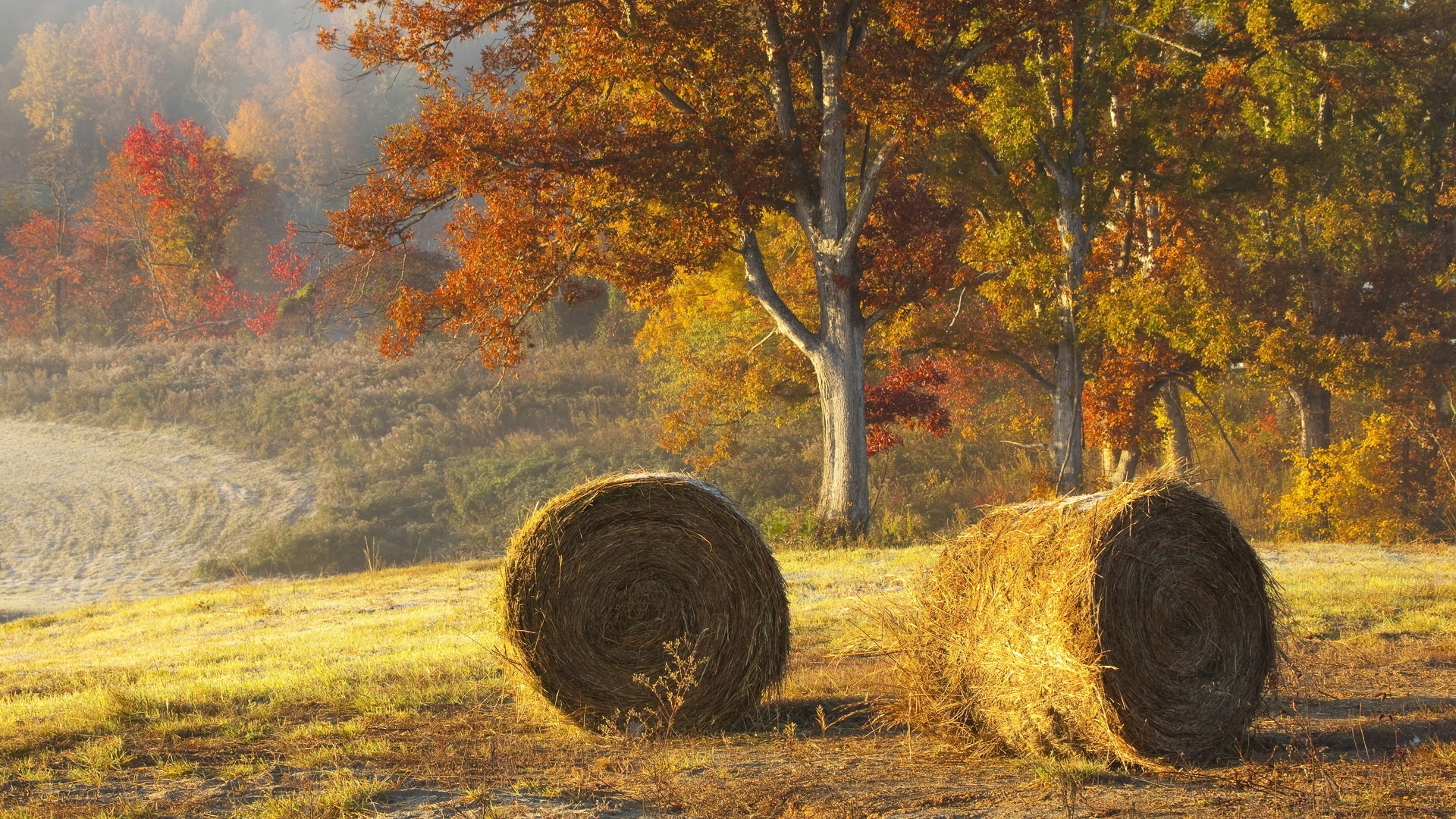 Free Fall Harvest Wallpaper Hay Bale Hd Wallpapers Full Hd Pictures