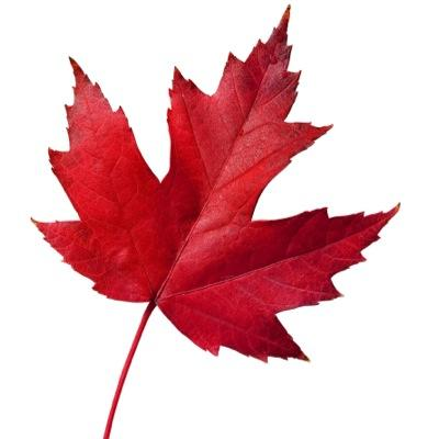 Sports Wallpapers Hd Red Leaf Photo 400x400 Full Hd Wall