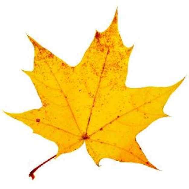 Free Fall Wallpaper For Cell Phones Yellow Leaf Background 626x626 Full Hd Wall
