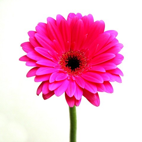 Best Islamic Hd Wallpapers For Desktop Pink Flower 480x478 Full Hd Wall