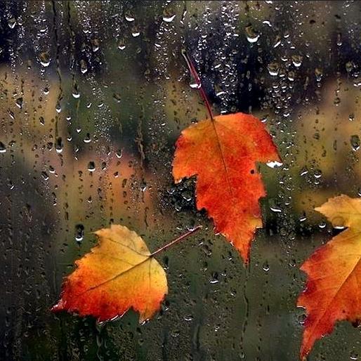 Rainy Fall Day Wallpaper Wallpaper Of Autumn Rain 514x514 Full Hd Wall