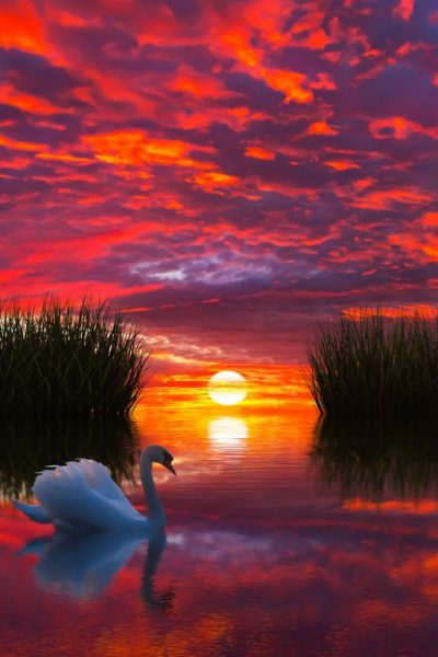 Sunset Photo 736x1104 - Full HD Wall