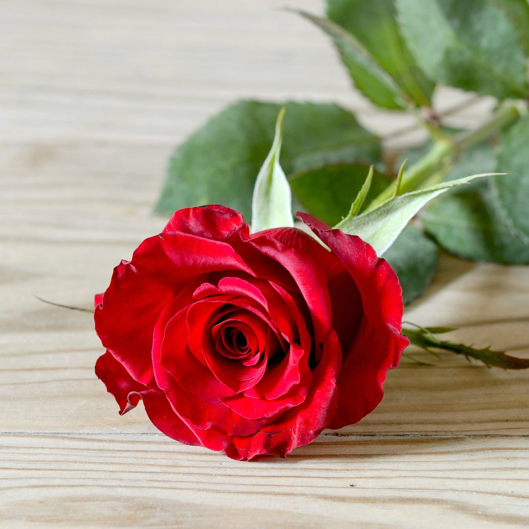 Cool Wallpapers For Phones 3d Red Rose 2134x2134 Full Hd Wall