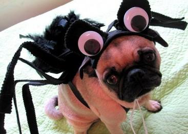 Halloween Tricks Treats About Costumes Fun Advisor