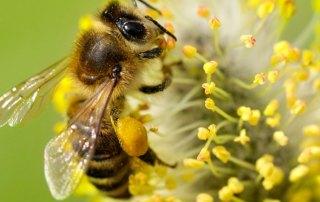 dlaczego-pszczoly-gina-i-jak-je-uratowac