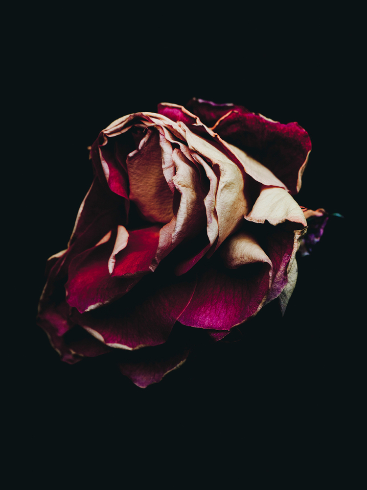 Sad Girl With Red Rose Wallpaper Beautiful Photographs Of Decaying Flowers By Billy Kidd