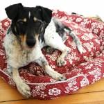 Recycling – Hundekörbchen aus 2 Kissenbezügen