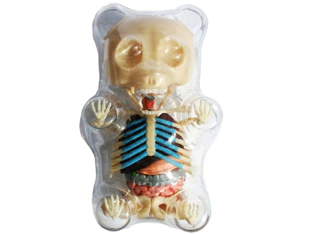 4d-master-gummi-bear-skeleton