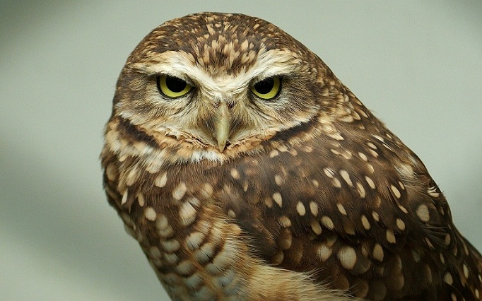 Cute Owl Wallpaper With Quotes 25 Attractive And Smart Owl Pictures