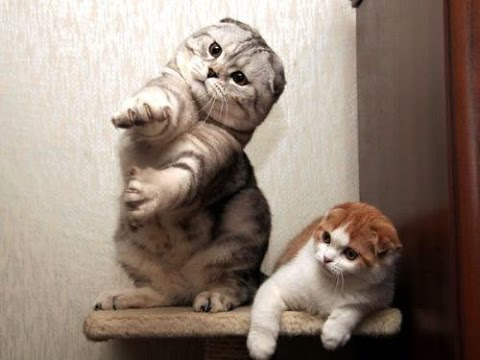 Cute Cat Moving Wallpaper Cats Dancing To Music Funny Cat Dance Compilation
