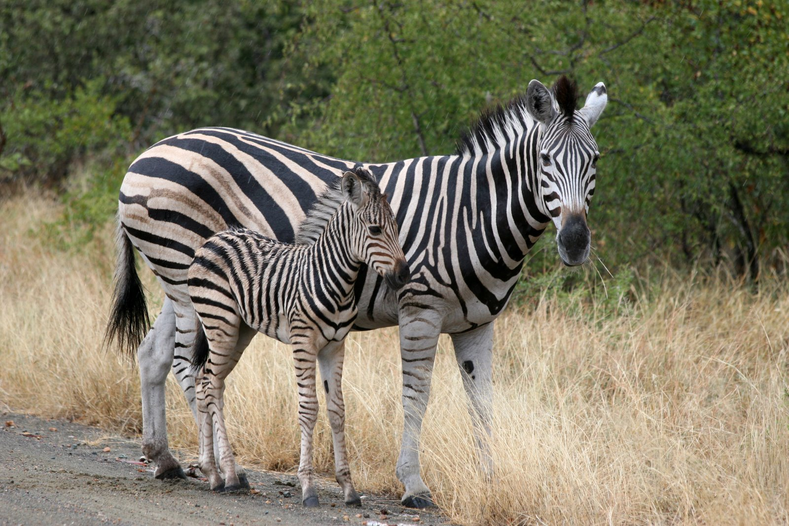 S4 Wallpaper Hd Funny African Animals 9 Hd Wallpaper Funnypicture Org