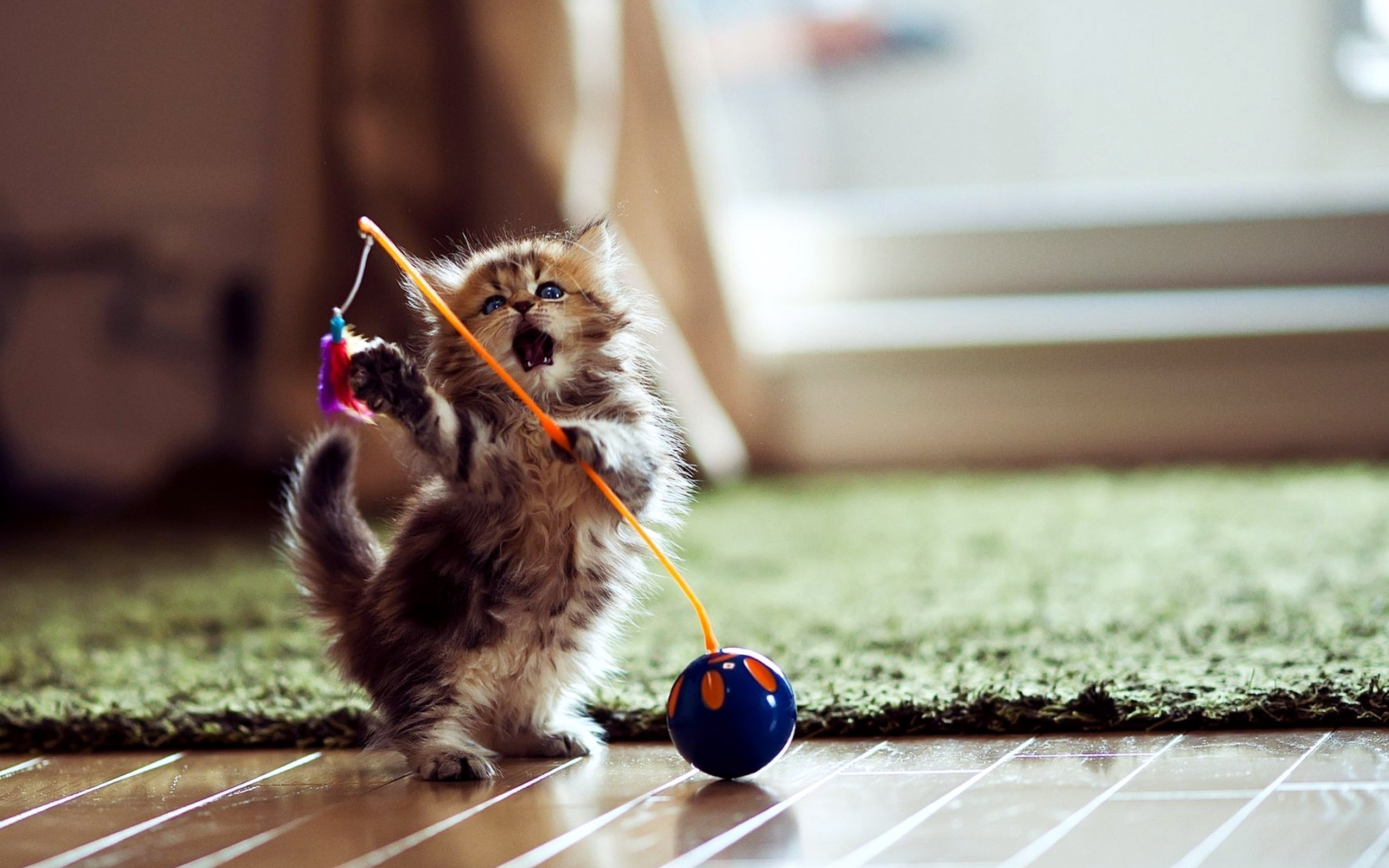 Cute Baby Pets Live Wallpaper Download Funny Cat Games 14 High Resolution Wallpaper