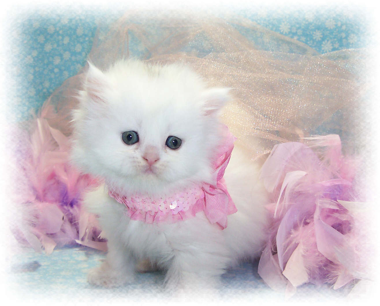 Cute Kitties Hd Wallpapers 30 Cute And Lovely Cat Wallpapers For Desktop