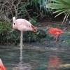 Brevard Zoo-small_5421628200