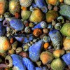 MARINAS-Brian Mo-Seashell-small_4477245779