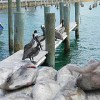Merry Fishing Pier-small_6280790113
