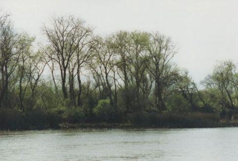 delta legend Delta River Image