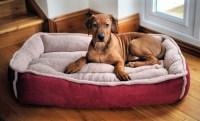 dog-bed  FurnitureRepairman.com