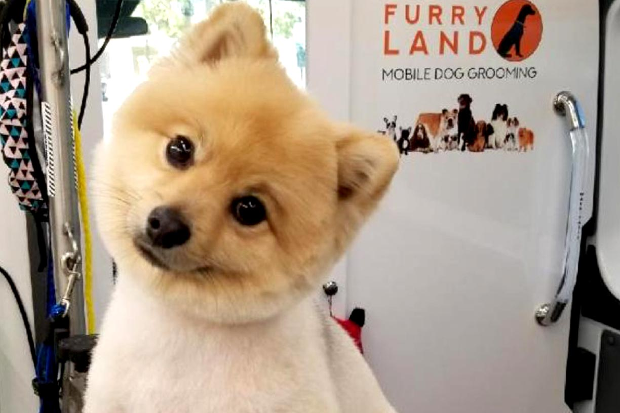 Lionetto Mobili Dog Grooming In Los Angeles Furry Land Mobile Grooming