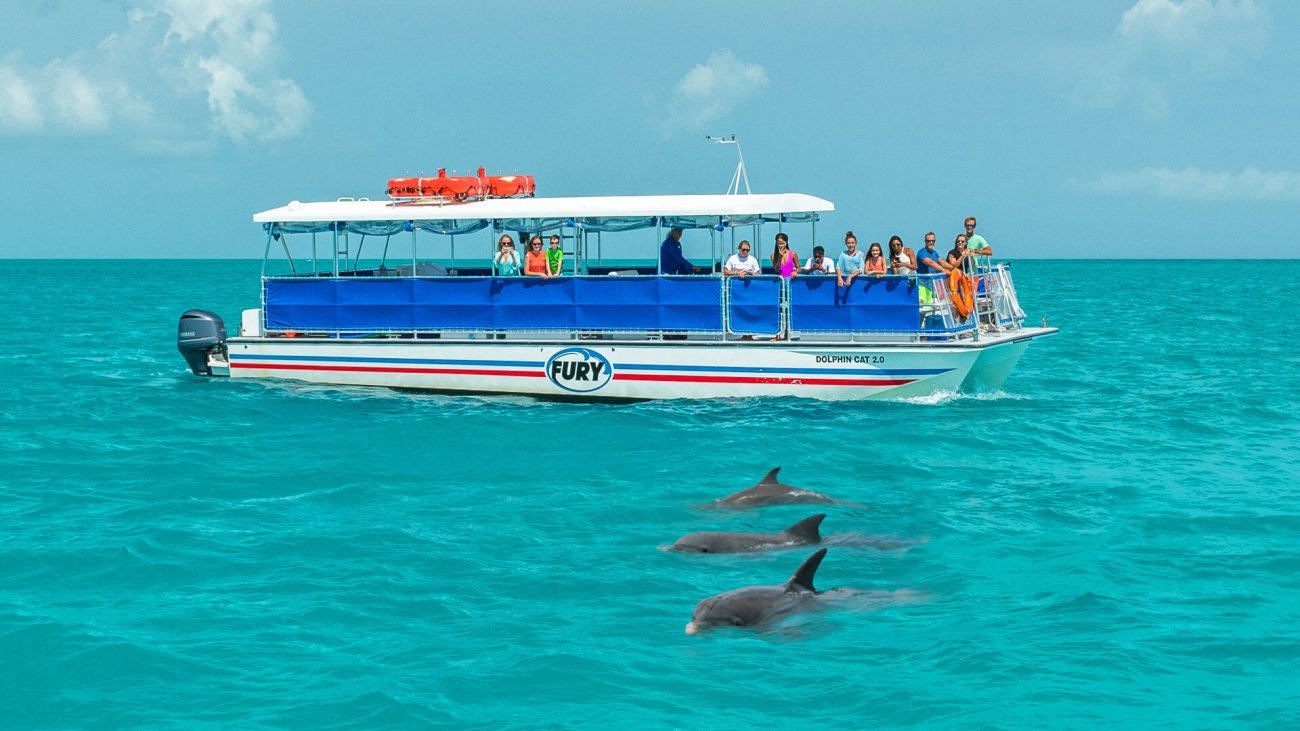 Tours Trip Key West Dolphin Watch Snorkeling And Dolphins In Key West