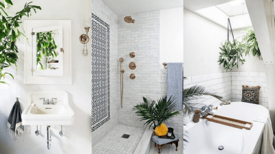 5 Plants That Will Survive, and Look Great in Your Bathroom