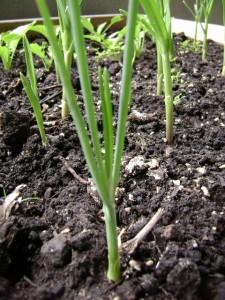 gardening4weeks2