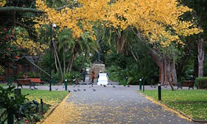The Company's Garden (photo courtesy of the City of Cape Town)