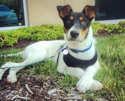 Image For Border Terrier Rescue Centre