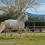 Summerwind_Marchador_horse_2178